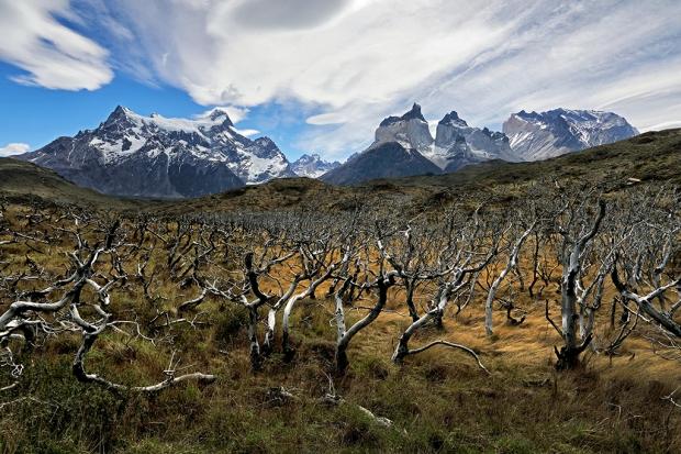 burned-tree-landscape-at-torres-del-paine