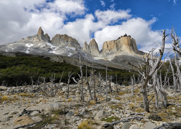 dead-trees-in-valle-del-frances