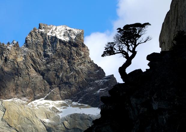 lone-tree-silhouette-landscape