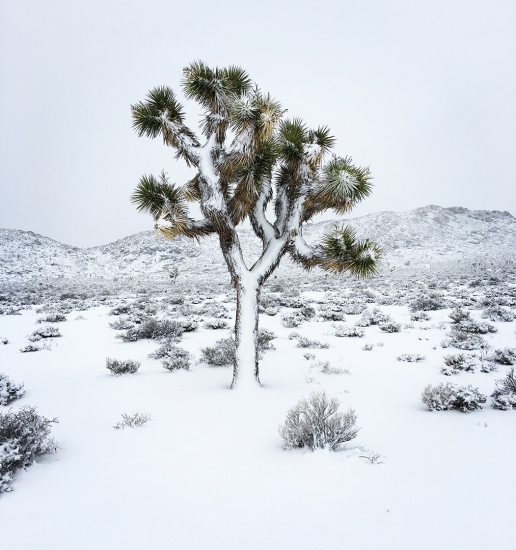 death-valley-snowstorm