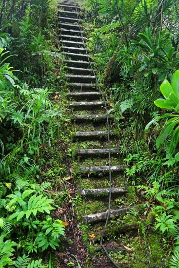 jungle-trail-ladder