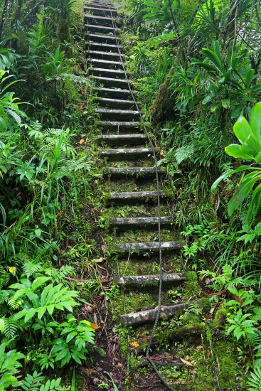 jungle-trail-ladder