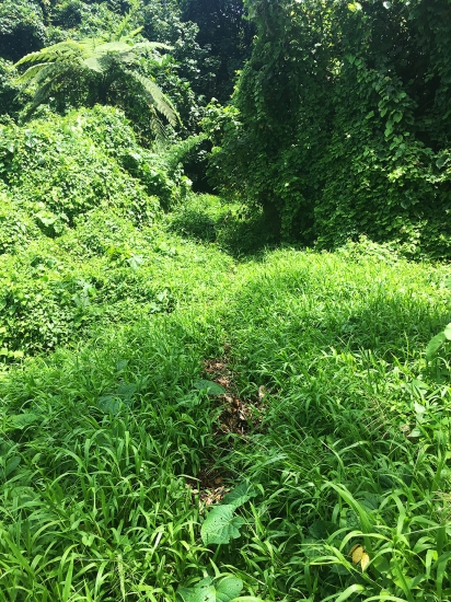 overgrown-section-of-mount-tumu-trail