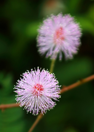 pink-flower-on-mount-alava-trail