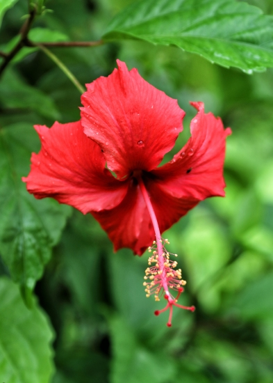 red-flower-on-mount-alava-trail