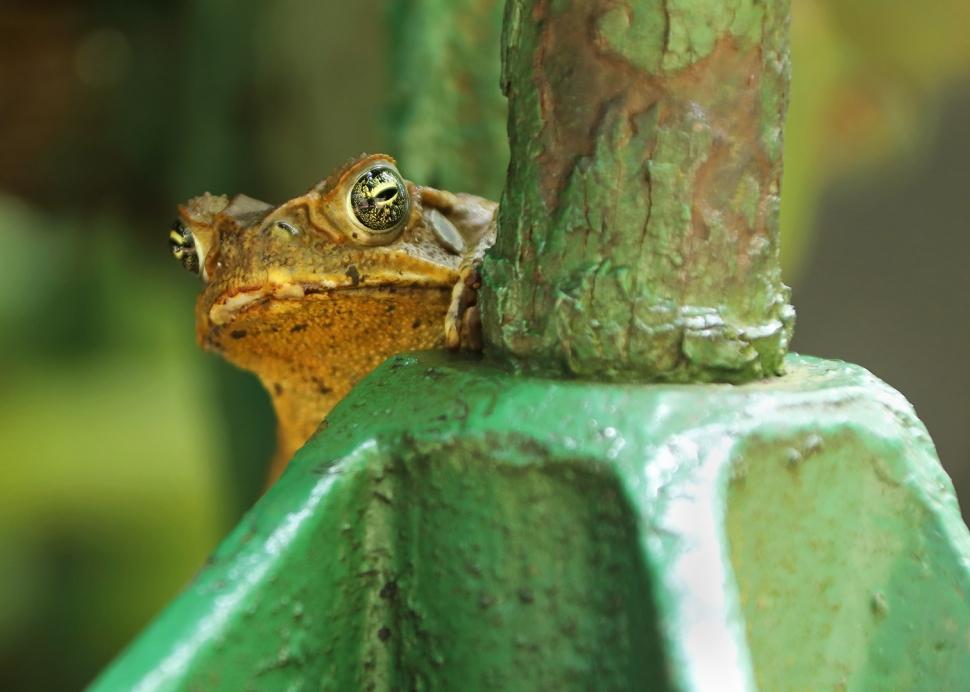 toad-attitude