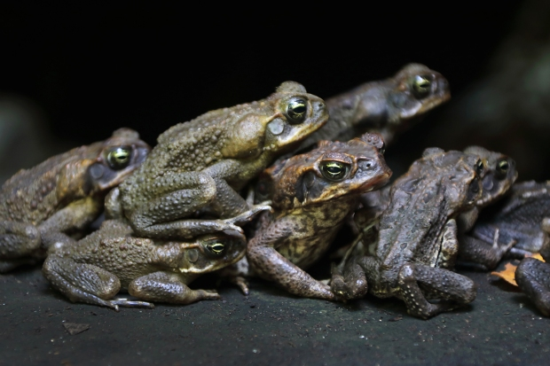 toad-togetherness