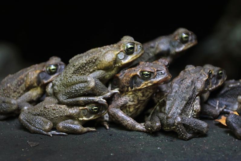 toad-togetherness