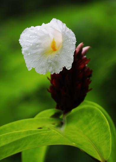 white-flower-on-mount-alava-trail